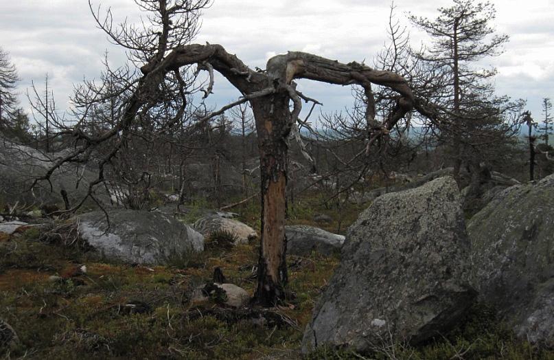 деревья на Воттовааре