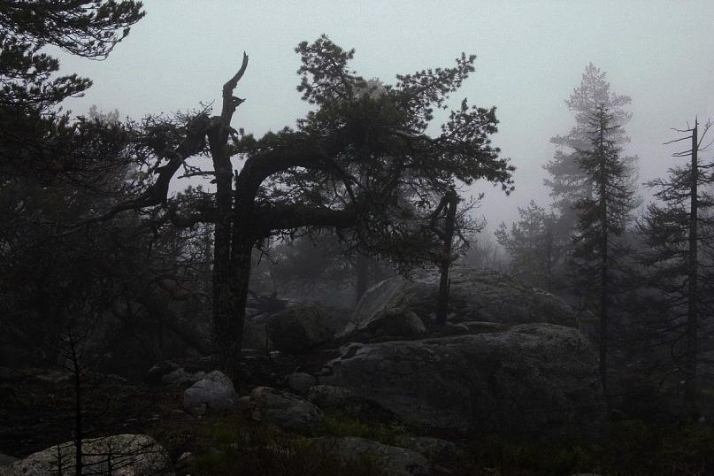 Воттоваара - Плач дерев от невыносимой боли