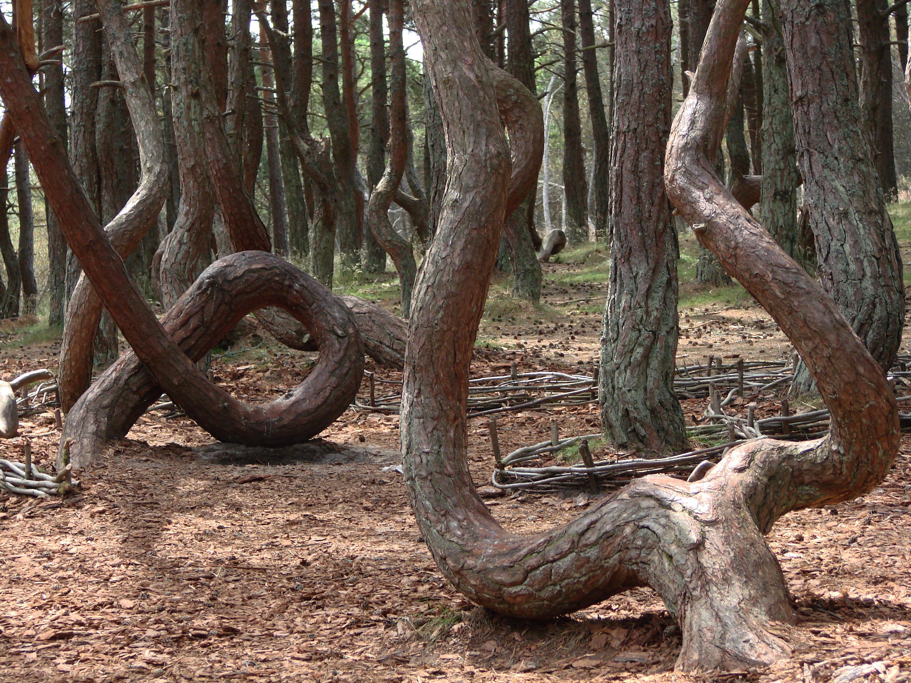 ЕСТЬ-Танцующий лес- 2009 123