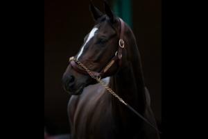 """Вывод, который можно сделать, отвергнув """"Эвклидово мышление"""", выглядит иначе: Конь СМОТРИТ, значит, он - не просто конь..."""