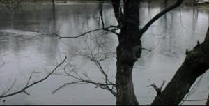 """Виды """"Заповедного острова"""", на котором """"растут"""" сухие деревья - уже не жизнеспособные, стоящие среди зелёных собратьев, как памятники непреодолимости запустения..."""