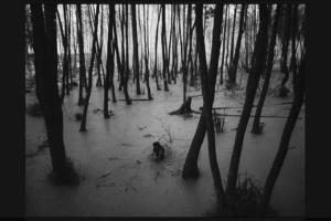 """ВОЗВРАЩЕНИЕ ИВАНА К СВОИМ - с того берега, где """"они"""", на этот берег, где """"наши"""". 12-летний Иван хорошо знает окрестности. Затопленный, мертвый лес - для него свой."""