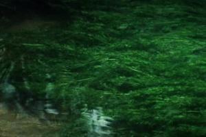 """Один из самых """"говорящих кадров"""" в фильме """"Солярис"""": журчащая вода со струйными водорослями..."""