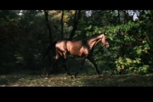 """Еще один очень интересный """"житель"""" острова, на котором Отчий дом стоит. То - Конь, появляющийся и исчезающий..."""