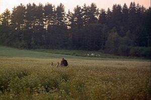 """Какая музыка над полем звучит, в лес улетая... То Гимн во славу Женщин """"жестковыйных"""", что на своем жизненной пути все смогли перенести, сил не жалея и не теряя..."""