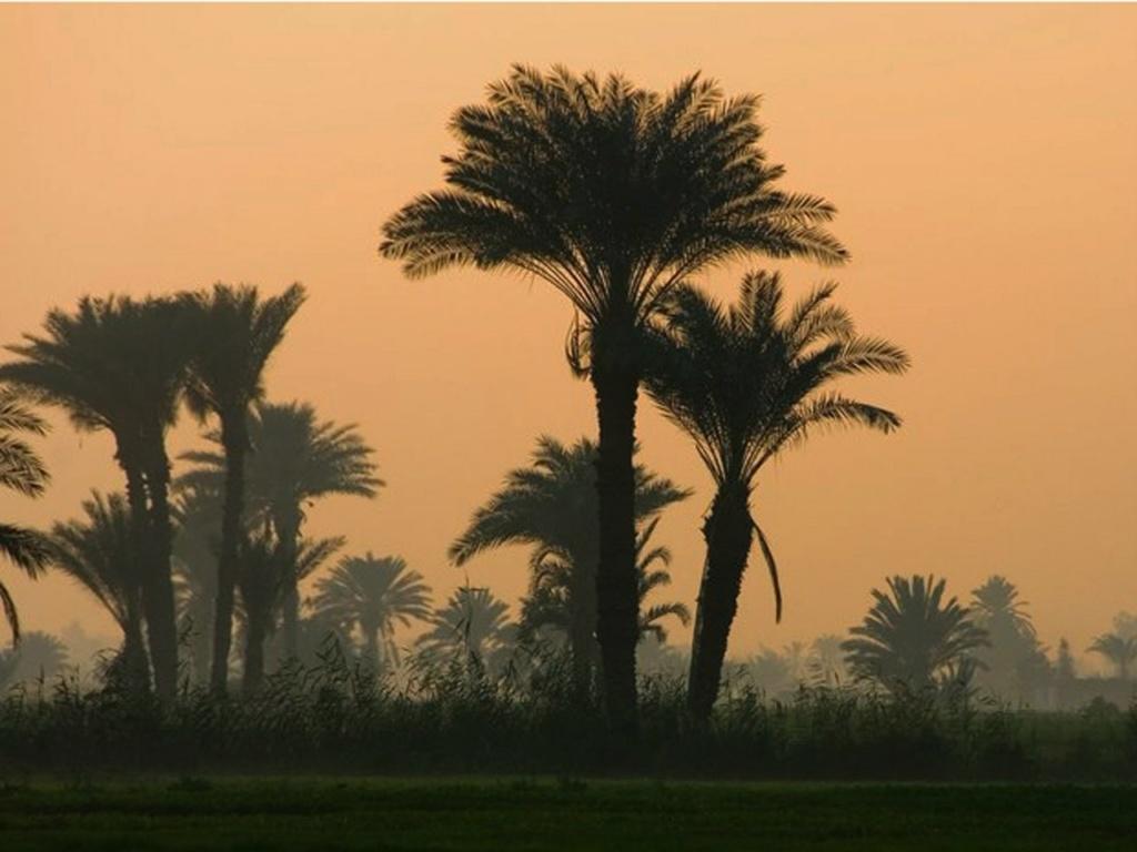 Средний Египет, Эль-Фаюм – оазис древностей и пирамид площадью 12 тыс. кв. км., что расположен в 60 км. к юго-западу от Каира. Его огромные сады сравнивают с садами Семирамиды. Здесь проживает 30 тыс. человек, в основном крестьяне и ремесленники