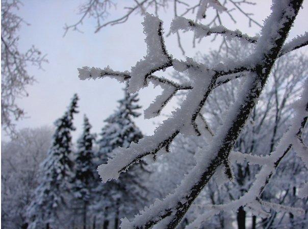 Снежный лес снят в Александровском саду и на Сенатской площади - в самом центре Санкт-Петербурга.