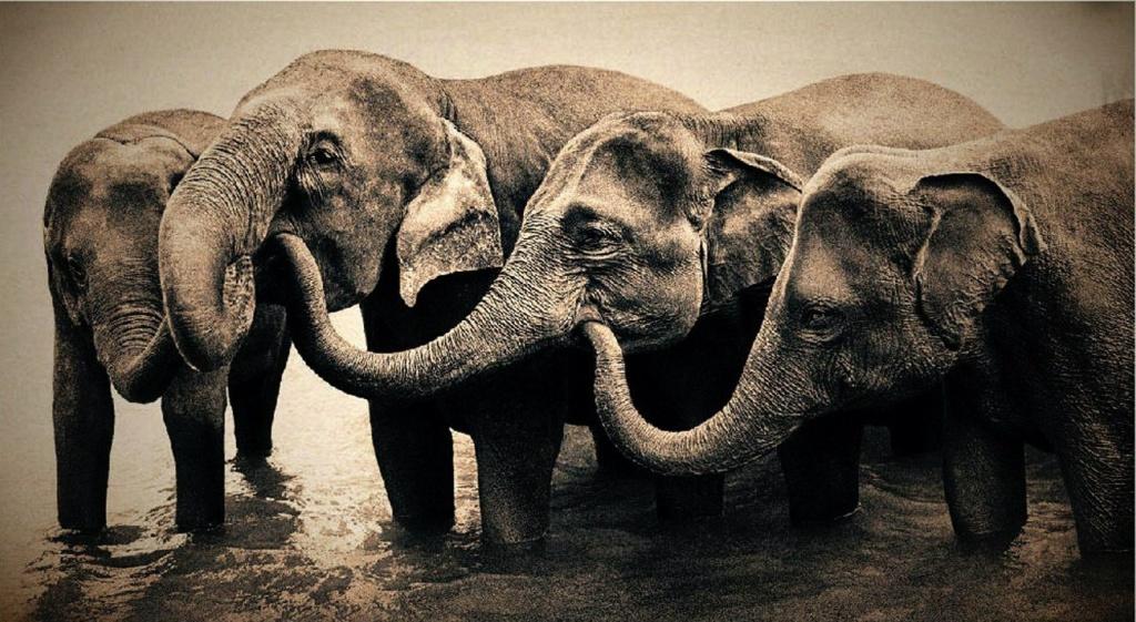 Самую главную роль в фильме играют слоны. Они имеют планетарный масштаб. Благодаря им, Земля превращается в мыслящее существо...