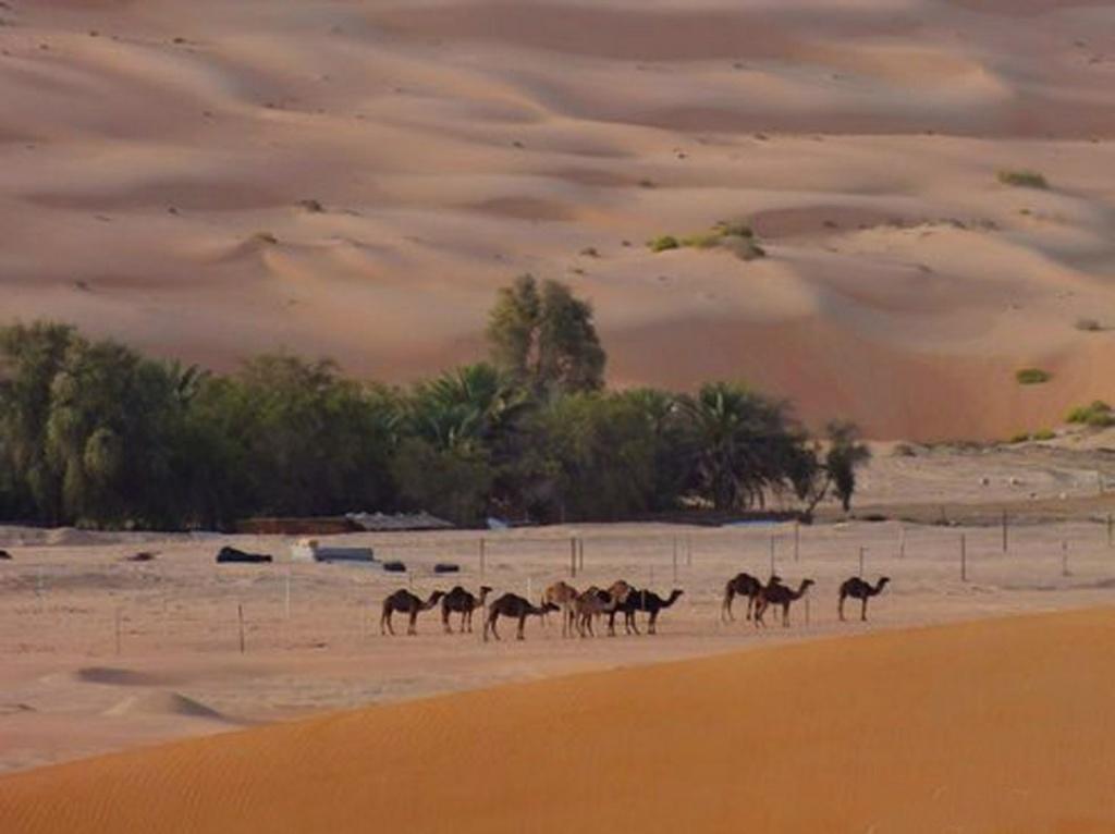 Безводные пустыни с драгоценными оазисами и зеленые леса горных районов, древние руины и современные мегаполисы - все эти контрасты и делают Иран мечтой путешественников.