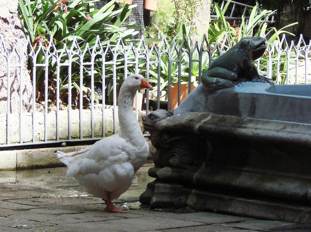 Клуатр в Кафедральном соборе Барселоны - жилище 13 белых гусей. Вопрос - что за существо сидит на углу ограждения бассейна?