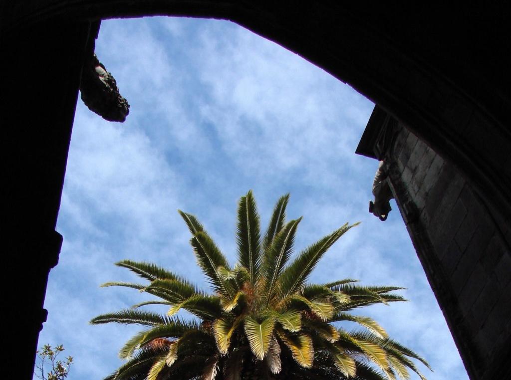 Клуатр в Кафедральном соборе Барселоны, где кроме гусей, лягушки и бассейна есть прекрасный пальмовый сад...