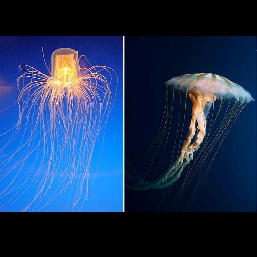 Морские медузы...