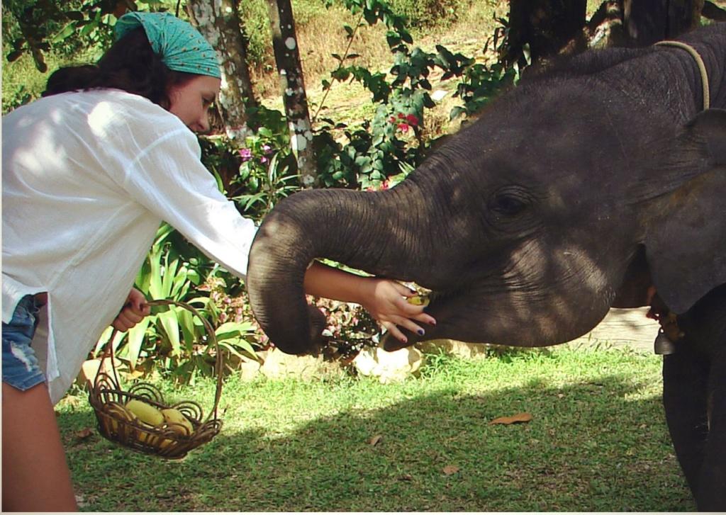 Сидя за компьютером, я посвящаю слонам восторженные описания. Мои дети в Таиланде общаются с ними, как с родными.