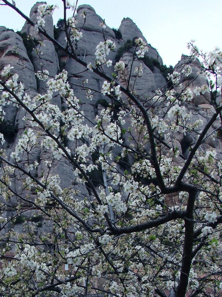 Гора Монтсеррат и яблоня в цвету - сочетание двух временных ритмов. Первый - геологический. Второй, в цветении дерева, - бесконечный повтор сезонных ритмов. Есть третий - того мистика, кто созерцает их соотношение, проникая в суть взаимосвязи.