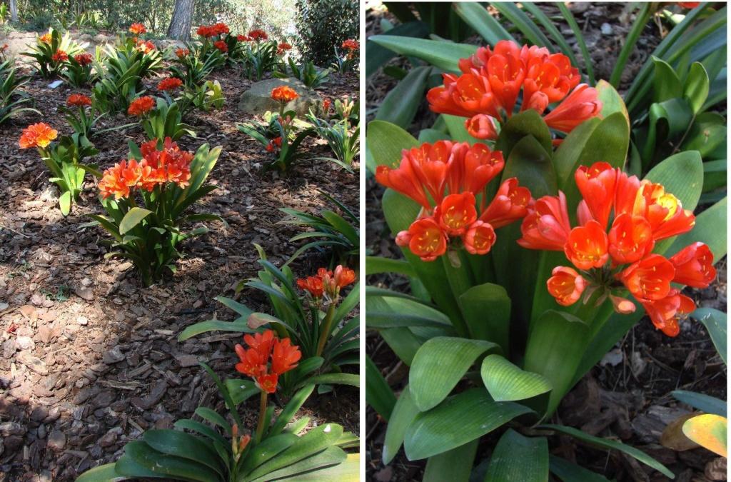Даже в марте месяце в Парке много цветов, в основном - крокусов. Представляете, сколько их будет летом и осенью...