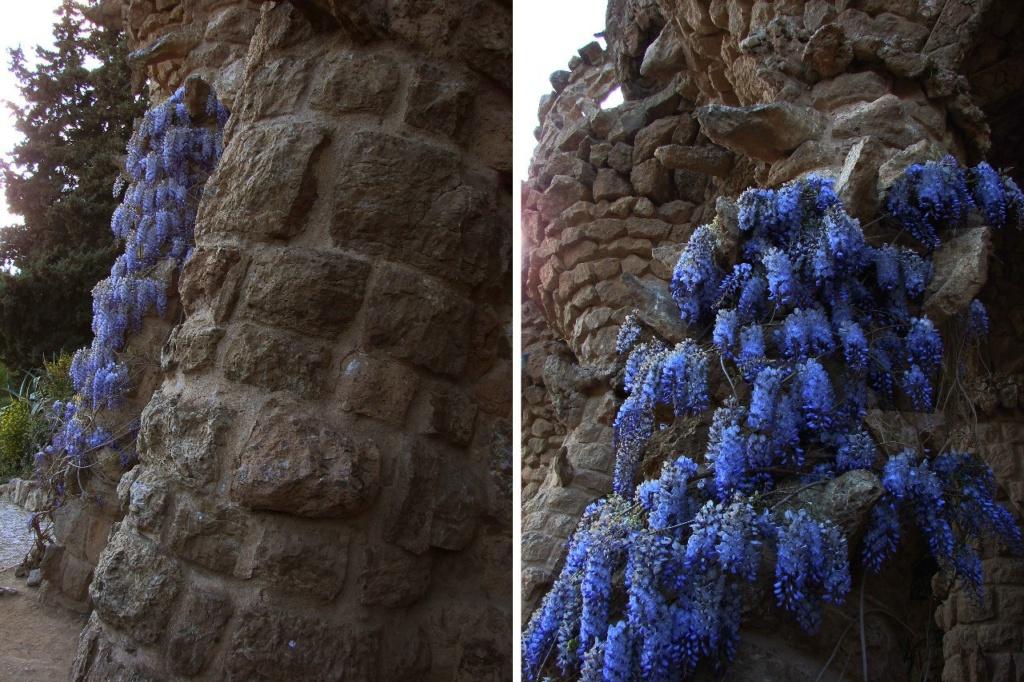 Парк Гуэль. Март месяц 2014 года. Цветущие глицинии на фоне камня, что тоже живой - принимающий различные формы.