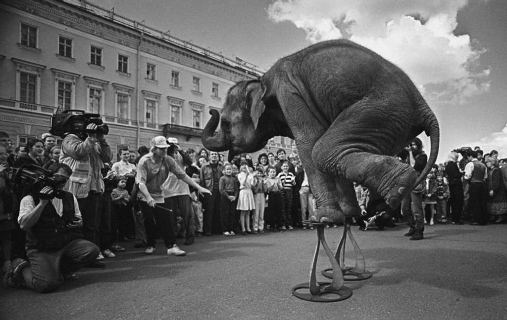 """В Петербурге сейчас, по-моему, нет слонов. Раньше были. И не только в зоопарке. Слонов по городу водили, а на Дворцовой площади они, как видите, давали представления. Но этого я видеть не хочу. Пусть слоны будут """"дикими"""" и с бивнями..."""