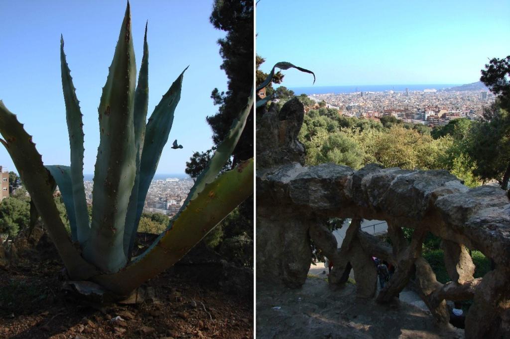 Фото слева - портрет агавы, очень распространенной в Парке. Фото справа - вид с галереи на Барселону и Средиземное море.