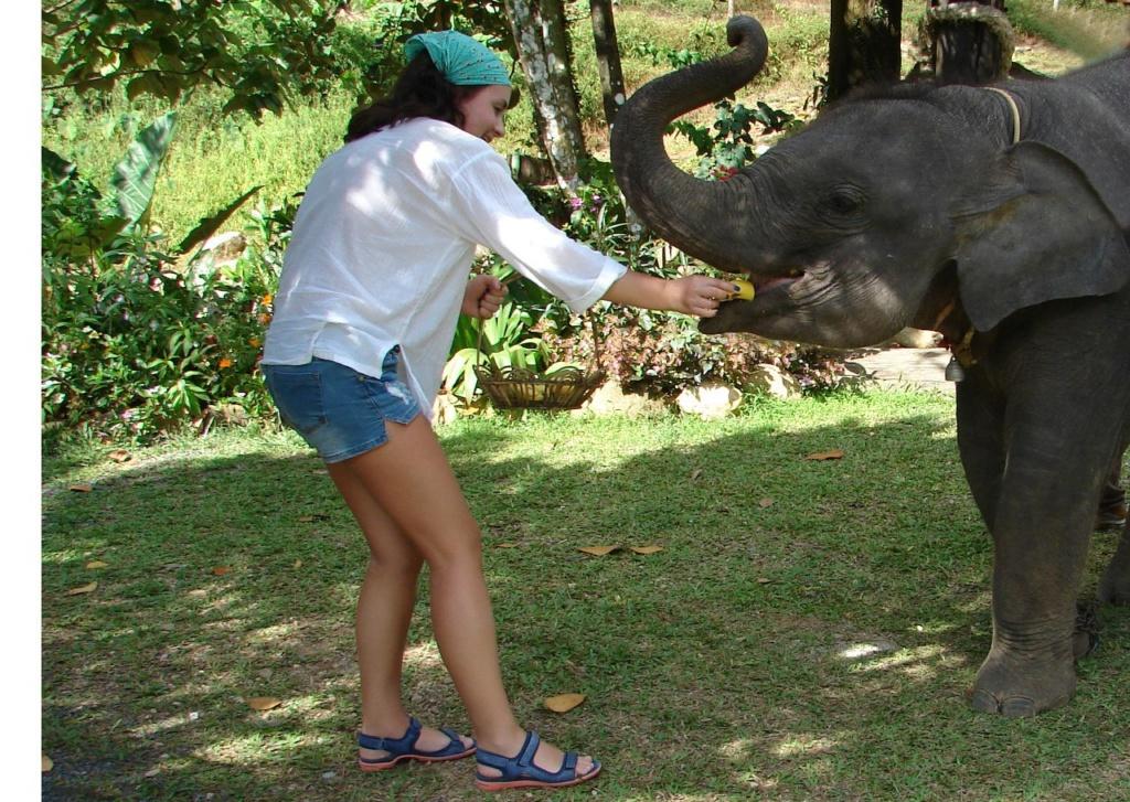 Начало знакомства - кормление слоненка бананами...