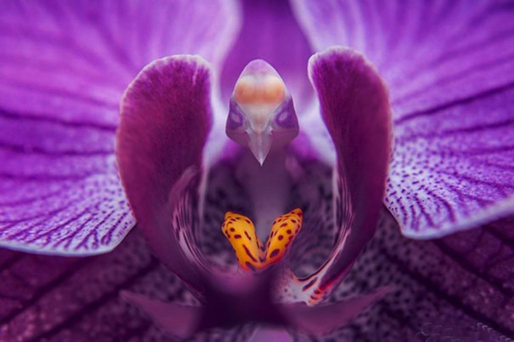 ПРИМЕРЫ ТОГО, ЧТО ДЛЯ ПРИРОДЫ (ИЛИ ТВОРЦА) НЕТ ЖЕСТКИХ РАЗГРАНИЧЕНИЙ МЕЖДУ ФЛОРОЙ И ФАУНОЙ. Орхидея «Мотылек» (Phalaenopsis)