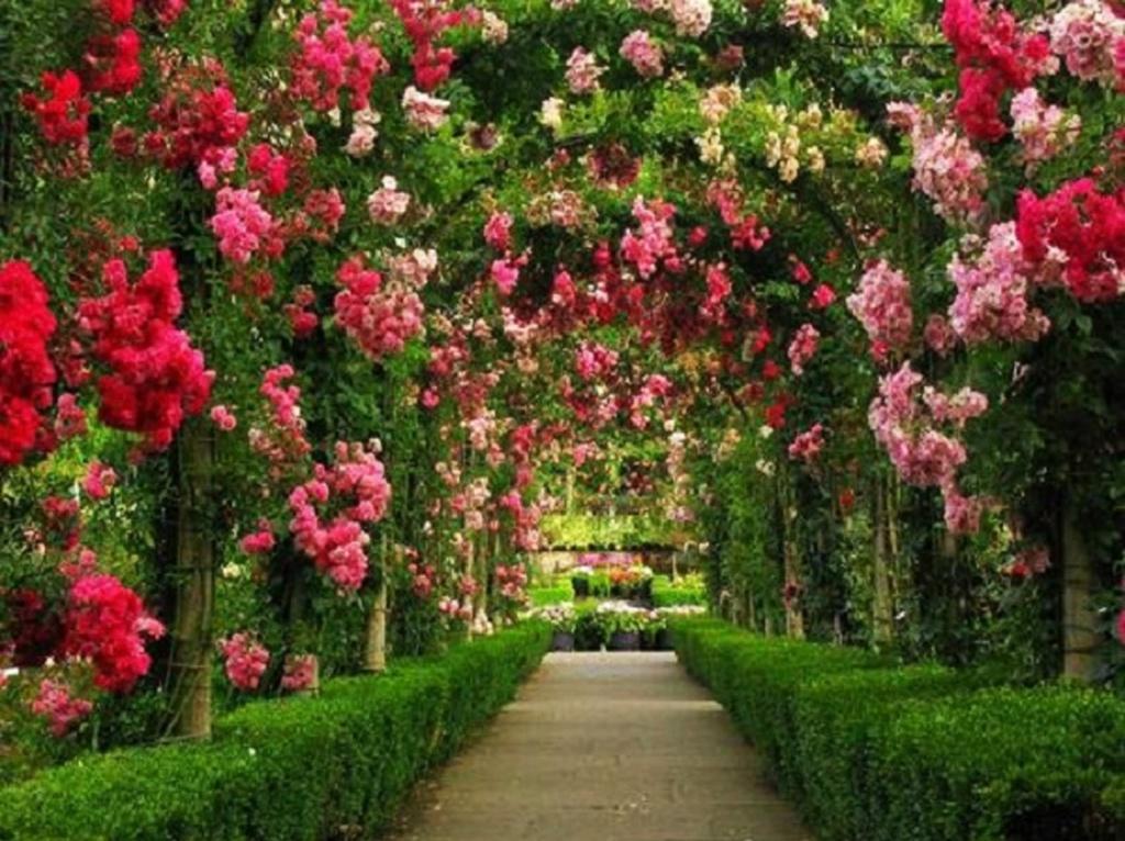 """В стране, где культура зеленых садов достигла совершенства, """"Каменный сад"""" на террасе не может не стать Райским..."""