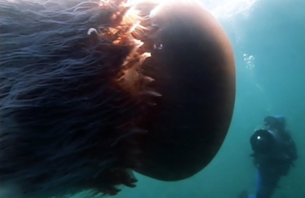 Гигантская медуза...