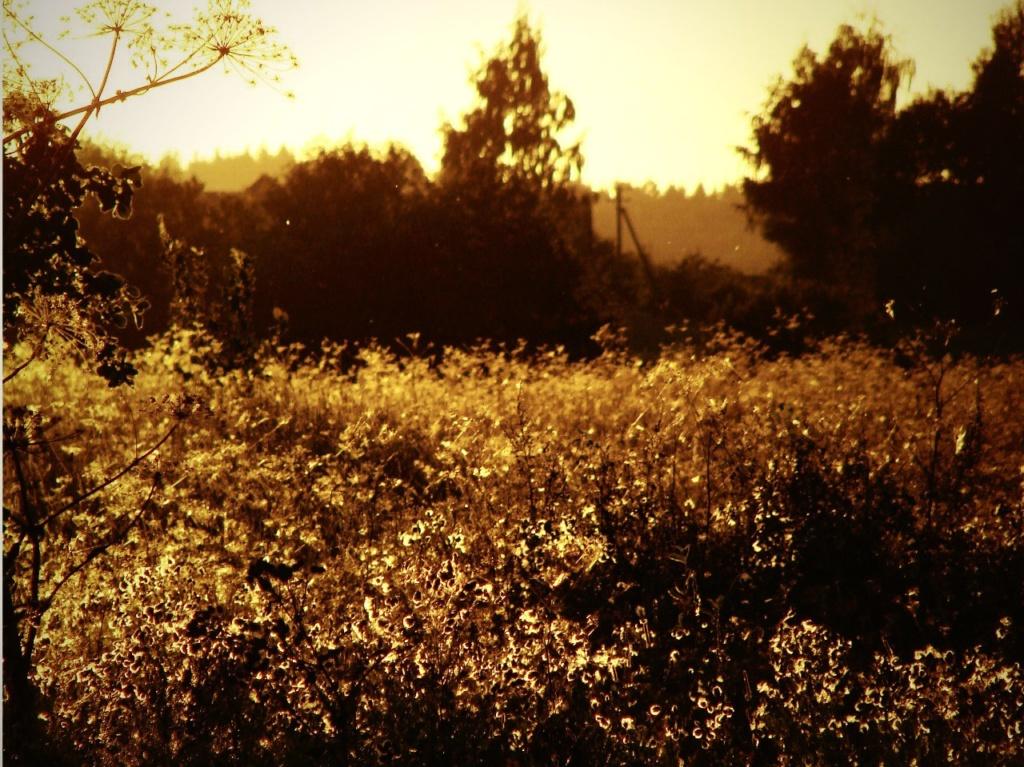 Брошенные поля вокруг Изборска на закате Солнца...