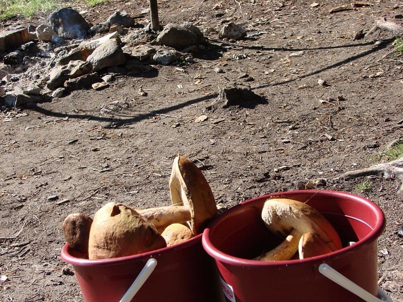Открою тайну: грибов за три поездки мы насушили на весь год. Сушку закончили за полчаса до отбытия на поезд. Дома досушивали. Ждем зиму, когда можно будет делать грибные подливки. Приглашаем в гости...