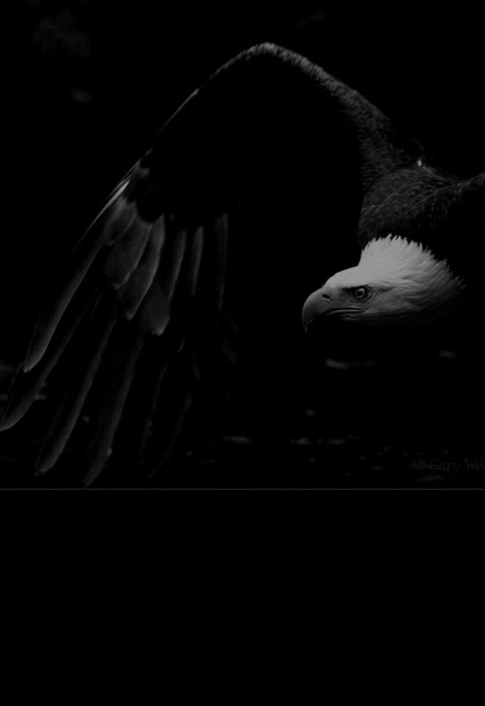 """К Доре этот образ не имеет отношения. Устав от монстров, хочу, чтобы возникло красивое видение, показывающее, как Дит """"веял крыльями и гнал три ветра вдоль по темной шири"""". Ассоциация примитивна? А разве вы не устали от сложностей?"""