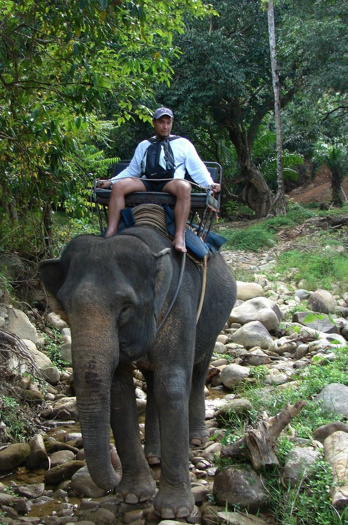 Потом началось катание на взрослых слонах. Первым проверил новый способ передвижения Глава семейства...