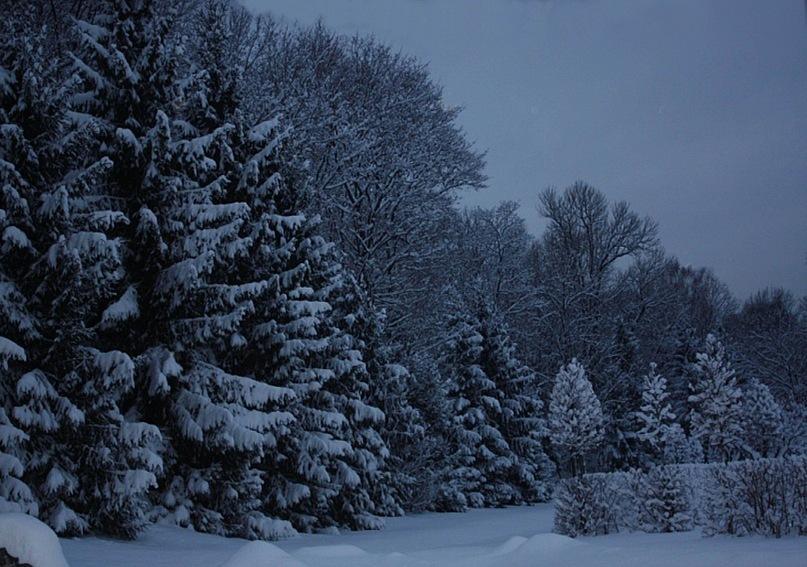 Фотографии Нижнего парка Жени Ярославцевой. Тишина, Холод, Сон... Очнитесь - в сон не погружайтесь: Зима заберет к себе...