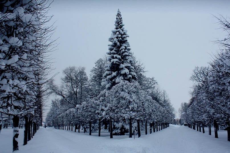 Фотографии Нижнего парка Жени Ярославцевой. Пустота, Тишина, Глубинные оси - что может быть более завораживающим...