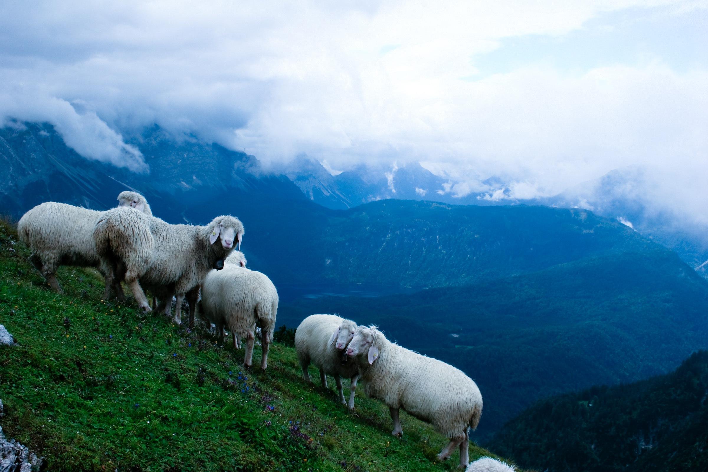 169Как сделать перевернутую овцу